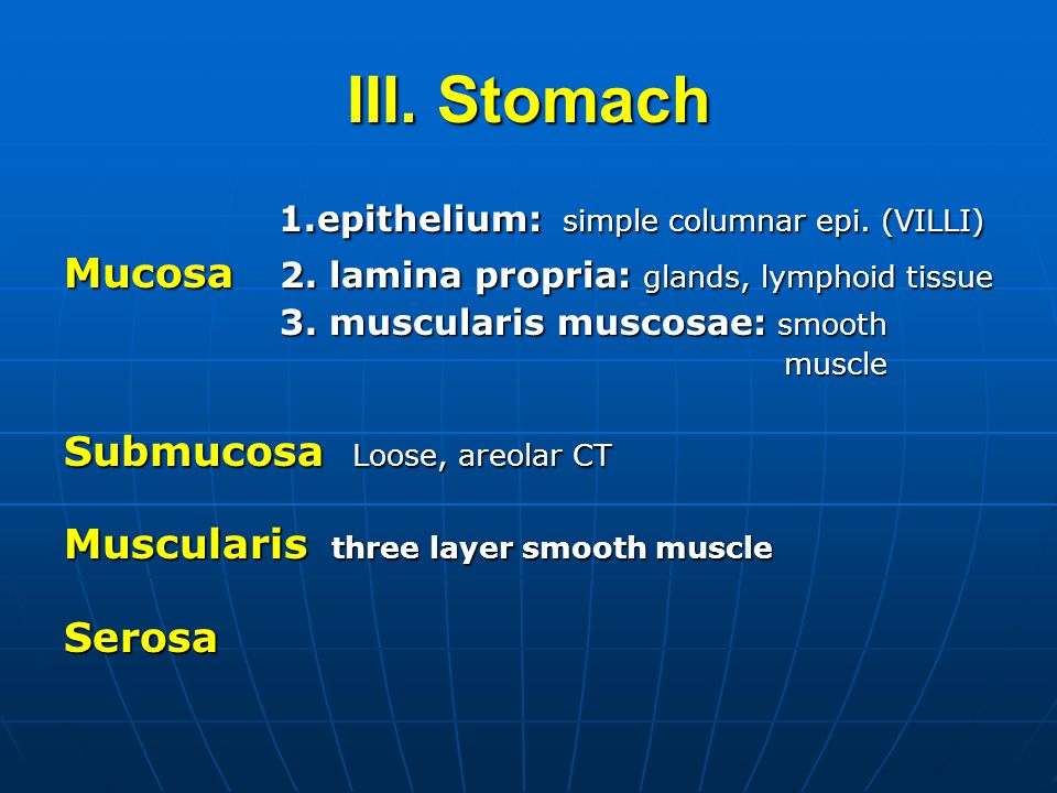 III. Stomach 1.epithelium: simple columnar epi. (VILLI) 1.epithelium: simple columnar epi.