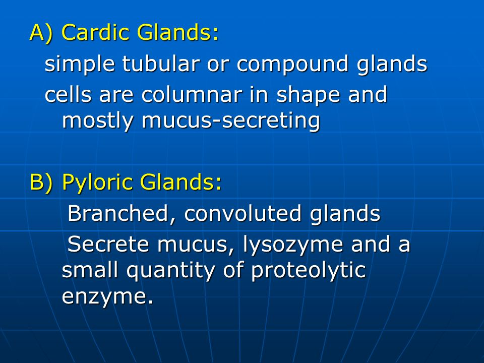 A) Cardic Glands: simple tubular or compound glands simple tubular or compound glands cells are columnar in shape and mostly mucus-secreting cells are columnar in shape and mostly mucus-secreting B) Pyloric Glands: Branched, convoluted glands Branched, convoluted glands Secrete mucus, lysozyme and a small quantity of proteolytic enzyme.