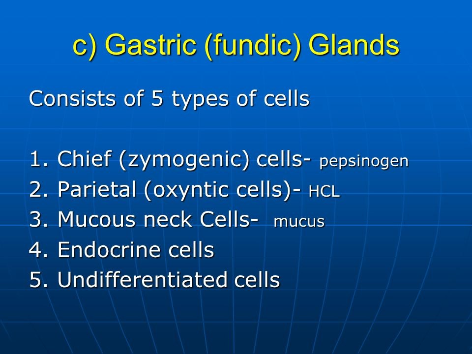 c) Gastric (fundic) Glands Consists of 5 types of cells 1.