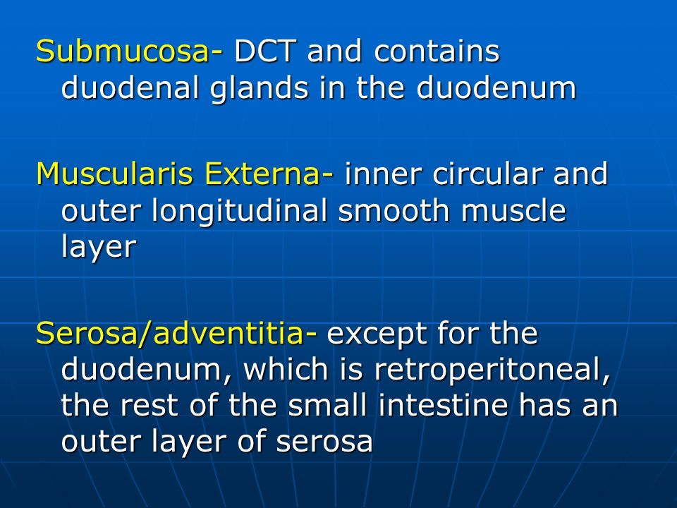 Submucosa- DCT and contains duodenal glands in the duodenum Muscularis Externa- inner circular and outer longitudinal smooth muscle layer Serosa/adventitia- except for the duodenum, which is retroperitoneal, the rest of the small intestine has an outer layer of serosa
