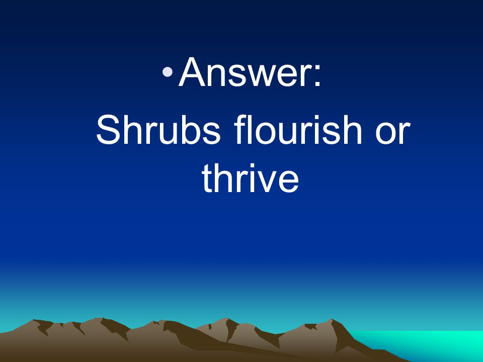 Answer: Shrubs flourish or thrive