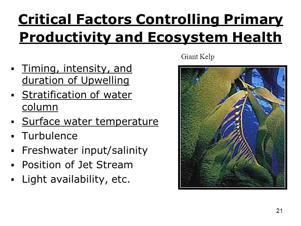 21 Critical Factors Controlling Primary Productivity and Ecosystem Health  Timing, intensity, and duration of Upwelling  Stratification of water column  Surface water temperature  Turbulence  Freshwater input/salinity  Position of Jet Stream  Light availability, etc.