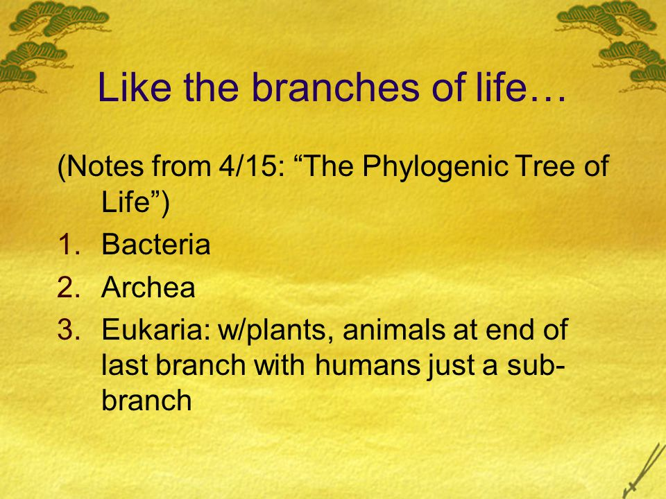 "Like the branches of life… (Notes from 4/15: ""The Phylogenic Tree of Life"") 1.Bacteria 2.Archea 3.Eukaria: w/plants, animals at end of last branch wit"