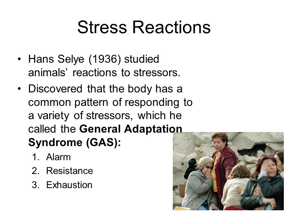Stress Reactions Hans Selye (1936) studied animals' reactions to stressors. Discovered that the body has a common pattern of responding to a variety o