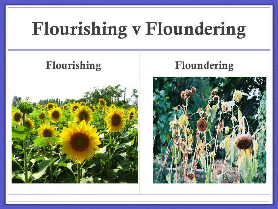 Flourishing v Floundering Flourishing Floundering