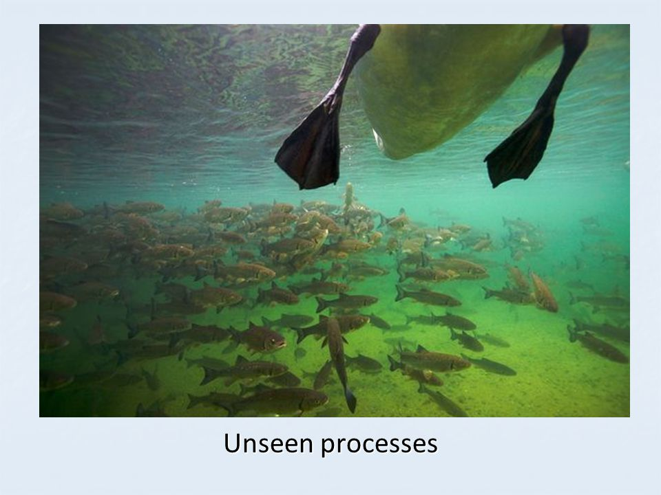 Unseen processes