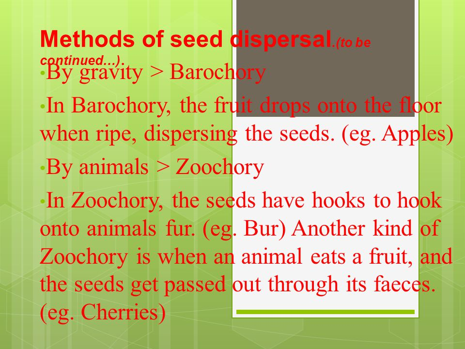 1.Name 3 plants that disperses its seeds by wind.