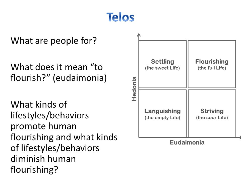 """What are people for? What does it mean """"to flourish?"""" (eudaimonia) What kinds of lifestyles/behaviors promote human flourishing and what kinds of life"""