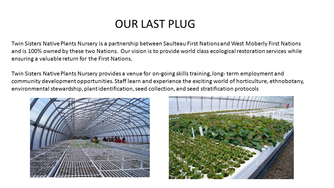 Twin Sisters Native Plants Nursery is a partnership between Saulteau First Nations and West Moberly First Nations and is 100% owned by these two Nations.