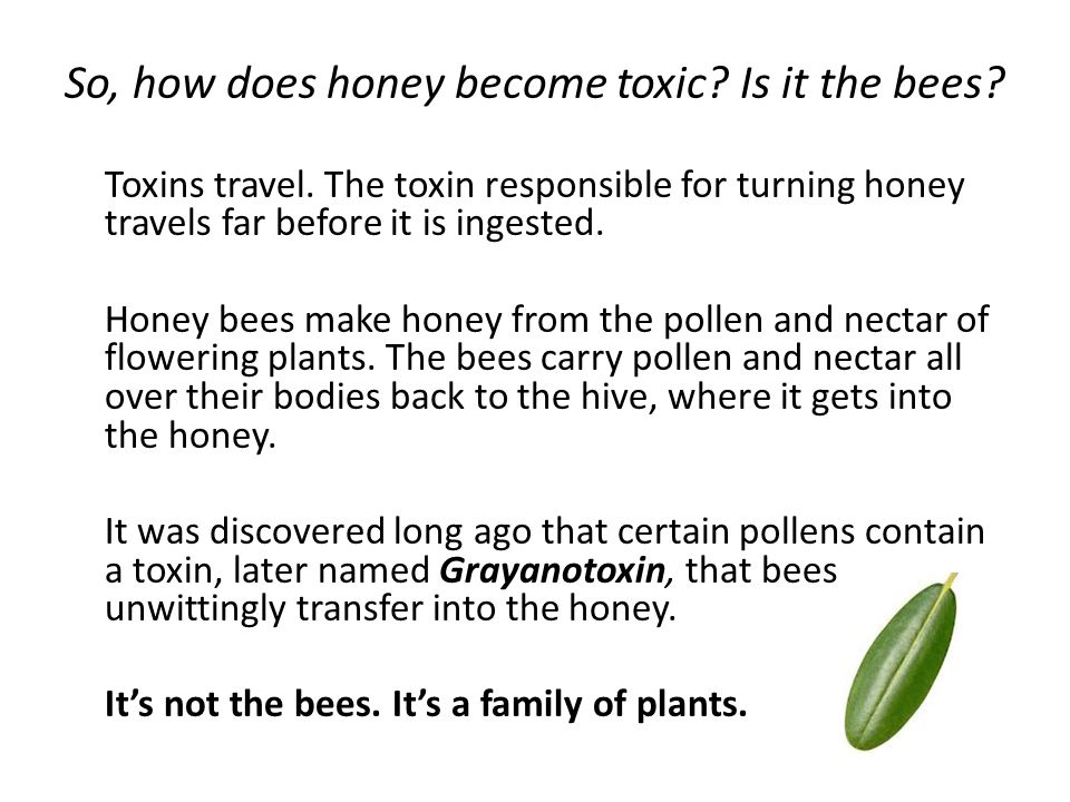 So, how does honey become toxic. Is it the bees. Toxins travel.