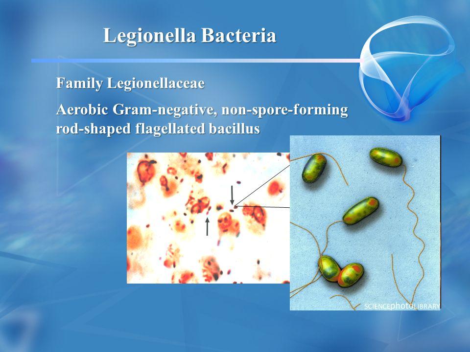 Family Legionellaceae Aerobic Gram-negative, non-spore-forming rod-shaped flagellated bacillus Legionella Bacteria