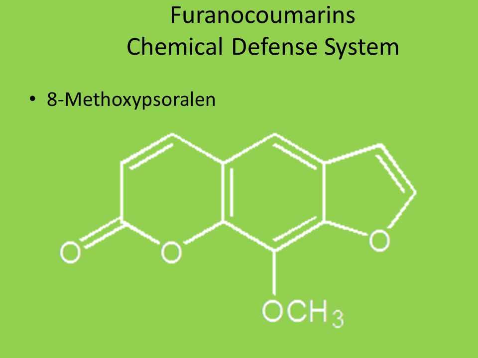 Furanocoumarins Chemical Defense System 8-Methoxypsoralen