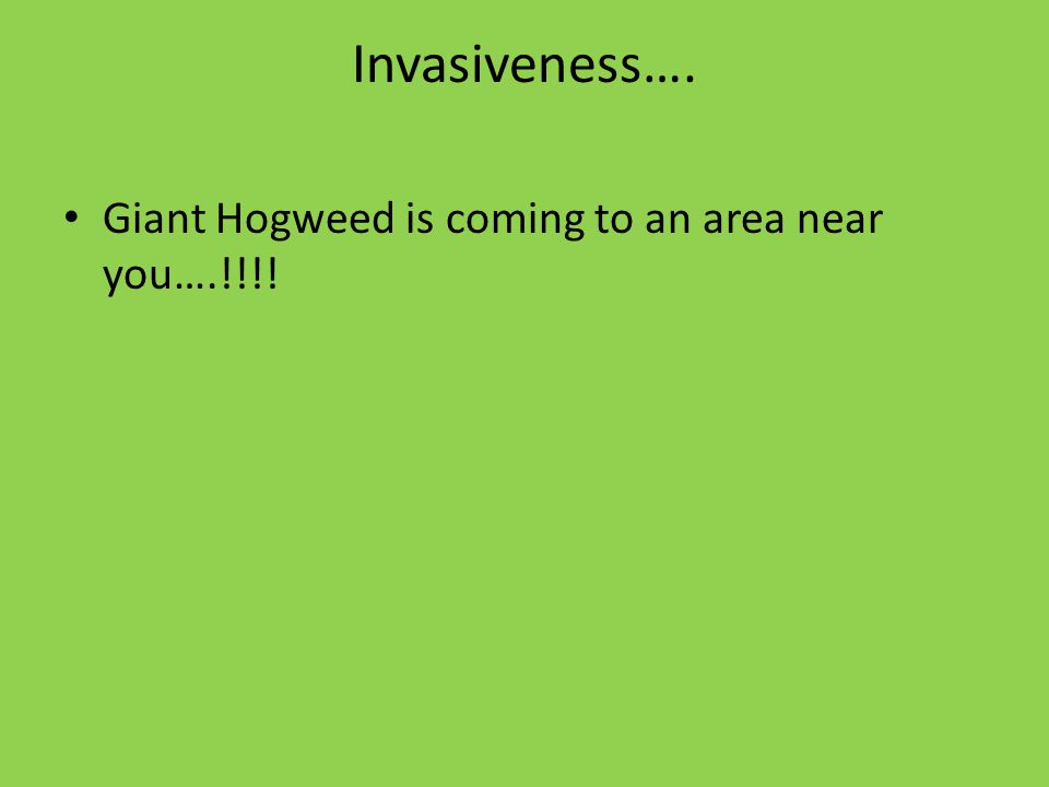 Invasiveness…. Giant Hogweed is coming to an area near you….!!!!