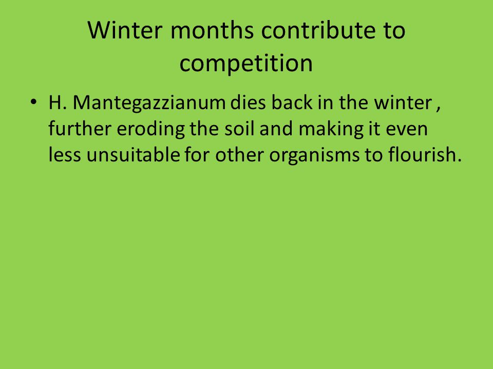 Winter months contribute to competition H. Mantegazzianum dies back in the winter, further eroding the soil and making it even less unsuitable for oth