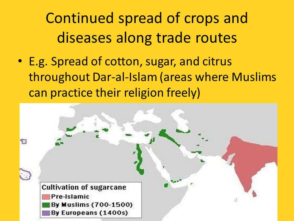 Continued spread of crops and diseases along trade routes E.g.