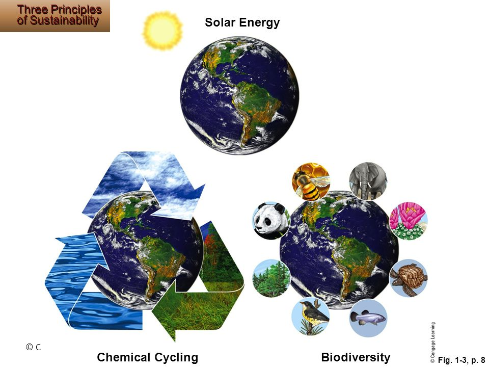 © Cengage Learning 2015 Fig. 1-3, p. 8 Solar Energy Chemical CyclingBiodiversity Three Principles of Sustainability