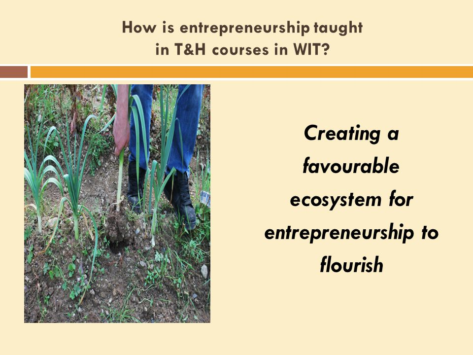 How is entrepreneurship taught in T&H courses in WIT.