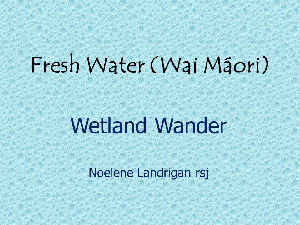 Fresh Water (Wai Máori) Wetland Wander Noelene Landrigan rsj
