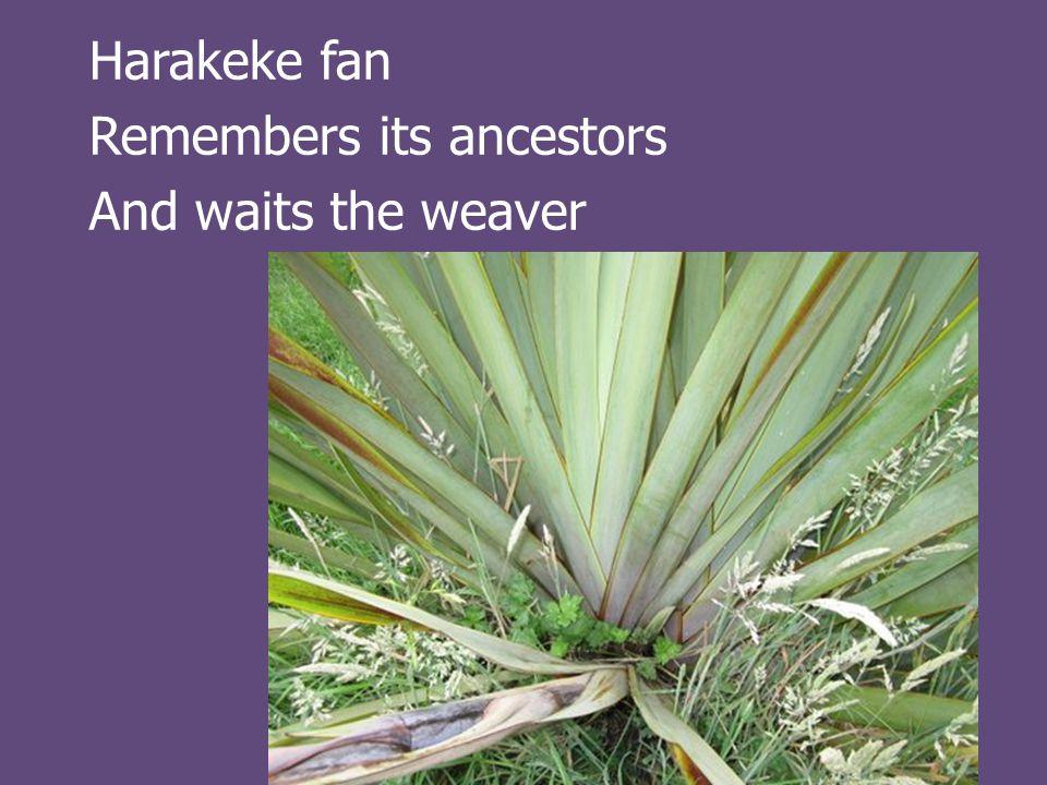 Harakeke fan Remembers its ancestors And waits the weaver