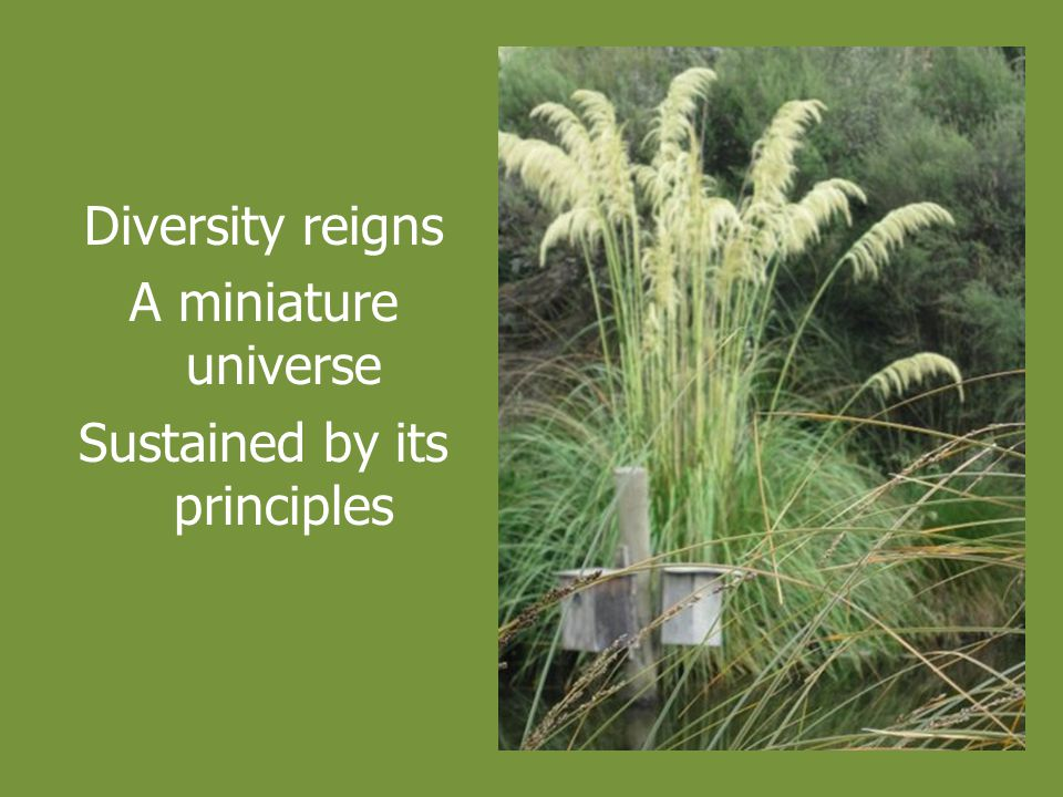 Diversity reigns A miniature universe Sustained by its principles