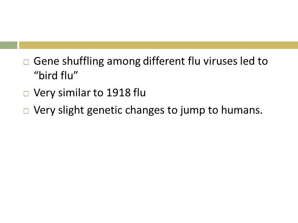 " Gene shuffling among different flu viruses led to ""bird flu""  Very similar to 1918 flu  Very slight genetic changes to jump to humans."