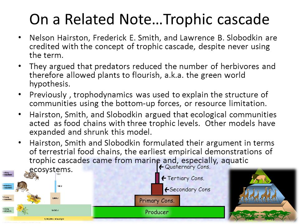 On a Related Note…Trophic cascade Nelson Hairston, Frederick E.