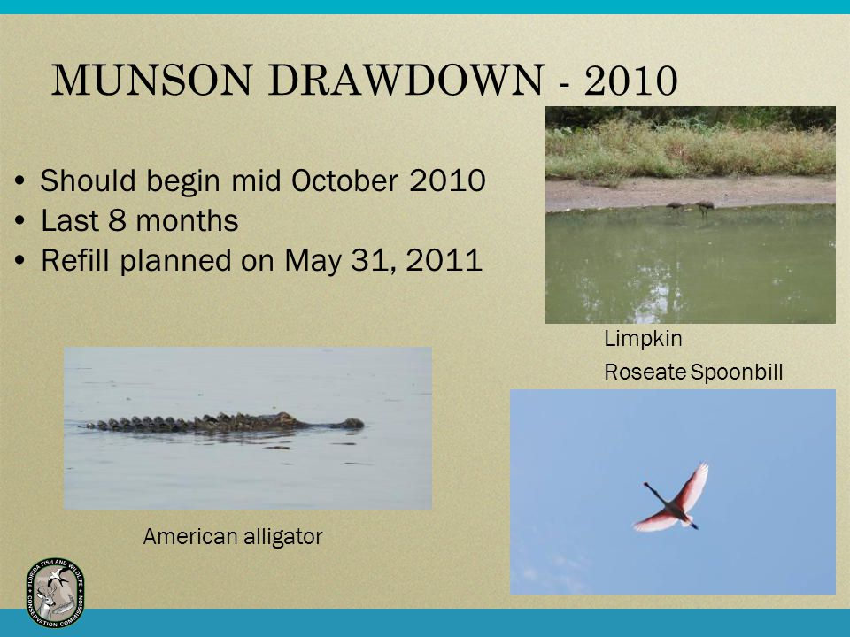 MUNSON DRAWDOWN - 2010 Should begin mid October 2010 Last 8 months Refill planned on May 31, 2011 Limpkin Roseate Spoonbill American alligator