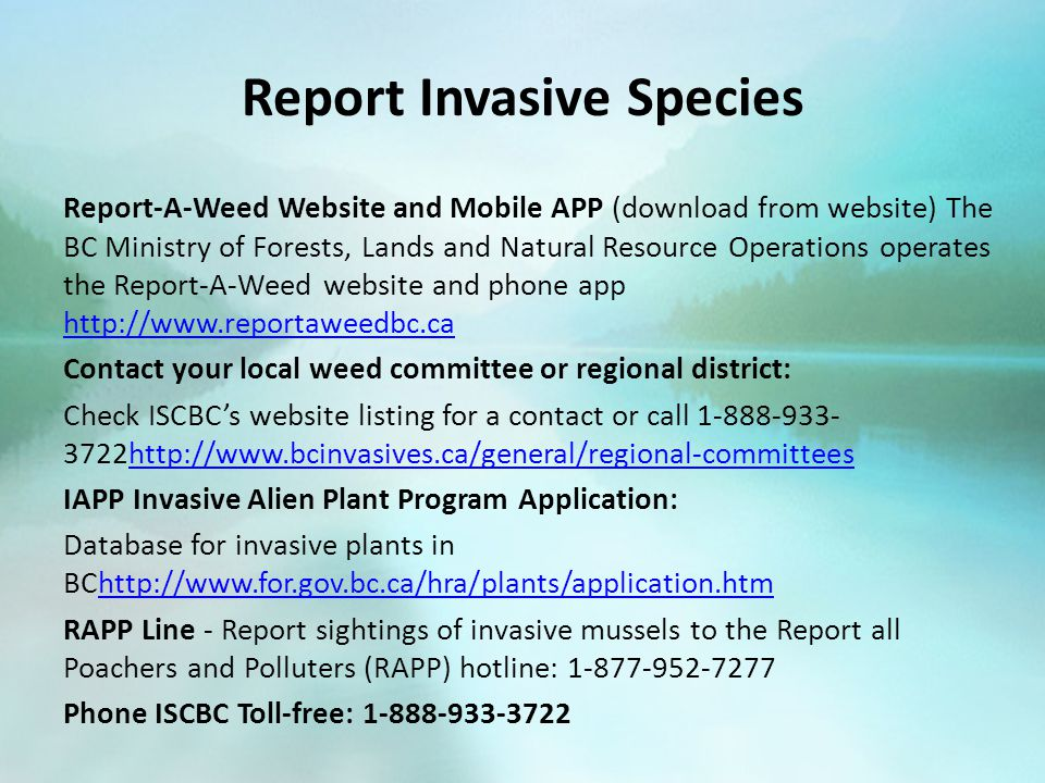 Report Invasive Species Report-A-Weed Website and Mobile APP (download from website) The BC Ministry of Forests, Lands and Natural Resource Operations operates the Report-A-Weed website and phone app http://www.reportaweedbc.ca http://www.reportaweedbc.ca Contact your local weed committee or regional district: Check ISCBC's website listing for a contact or call 1-888-933- 3722http://www.bcinvasives.ca/general/regional-committeeshttp://www.bcinvasives.ca/general/regional-committees IAPP Invasive Alien Plant Program Application: Database for invasive plants in BChttp://www.for.gov.bc.ca/hra/plants/application.htmhttp://www.for.gov.bc.ca/hra/plants/application.htm RAPP Line - Report sightings of invasive mussels to the Report all Poachers and Polluters (RAPP) hotline: 1-877-952-7277 Phone ISCBC Toll-free: 1-888-933-3722