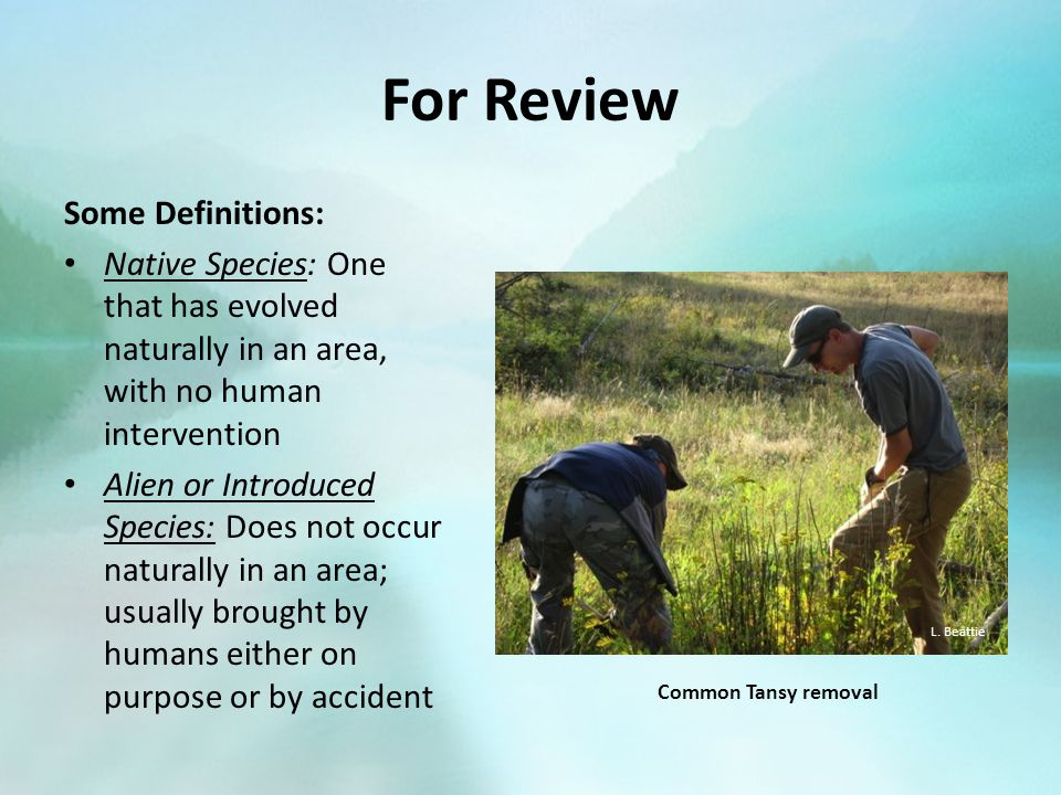 For Review Some Definitions: Native Species: One that has evolved naturally in an area, with no human intervention Alien or Introduced Species: Does not occur naturally in an area; usually brought by humans either on purpose or by accident L.