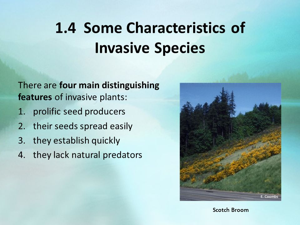 1.4 Some Characteristics of Invasive Species There are four main distinguishing features of invasive plants: 1.prolific seed producers 2.their seeds s