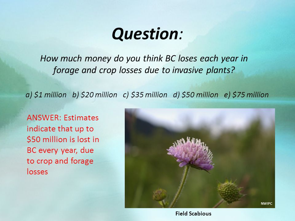 Question: How much money do you think BC loses each year in forage and crop losses due to invasive plants? a) $1 million b) $20 million c) $35 million