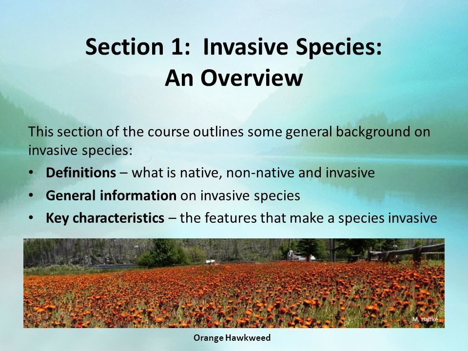 Section 1: Invasive Species: An Overview This section of the course outlines some general background on invasive species: Definitions – what is native, non-native and invasive General information on invasive species Key characteristics – the features that make a species invasive M.