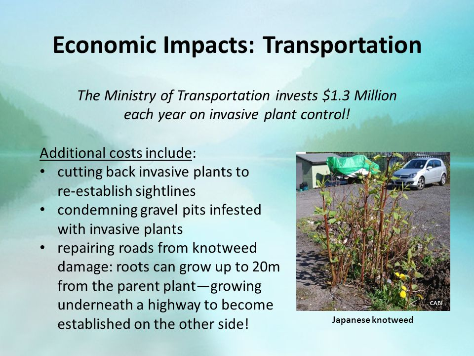 Economic Impacts: Transportation The Ministry of Transportation invests $1.3 Million each year on invasive plant control.