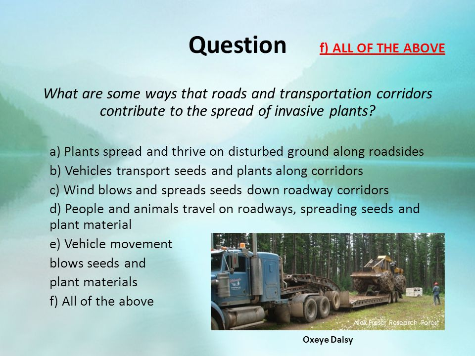 Question What are some ways that roads and transportation corridors contribute to the spread of invasive plants? a) Plants spread and thrive on distur