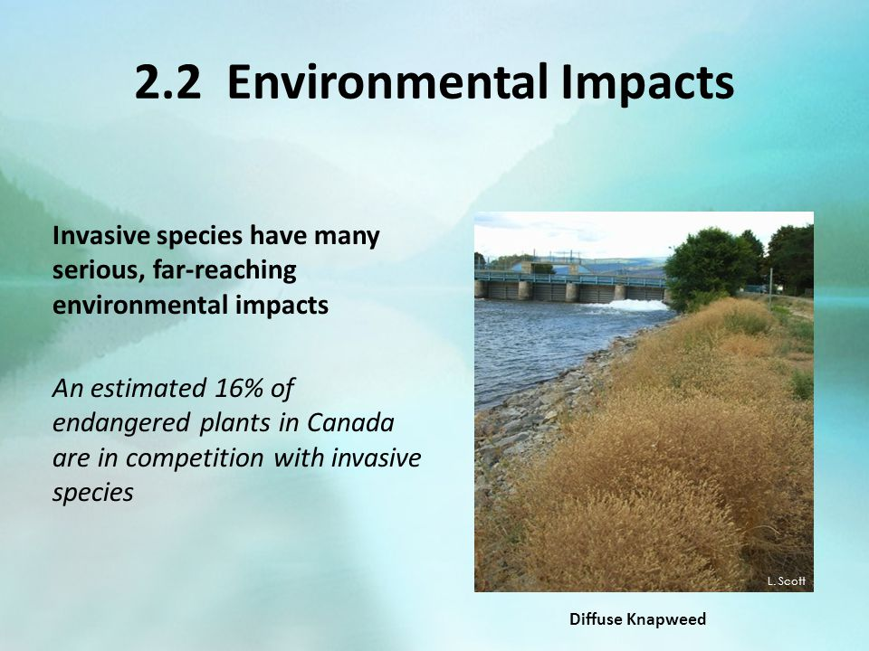 2.2 Environmental Impacts Invasive species have many serious, far-reaching environmental impacts An estimated 16% of endangered plants in Canada are i