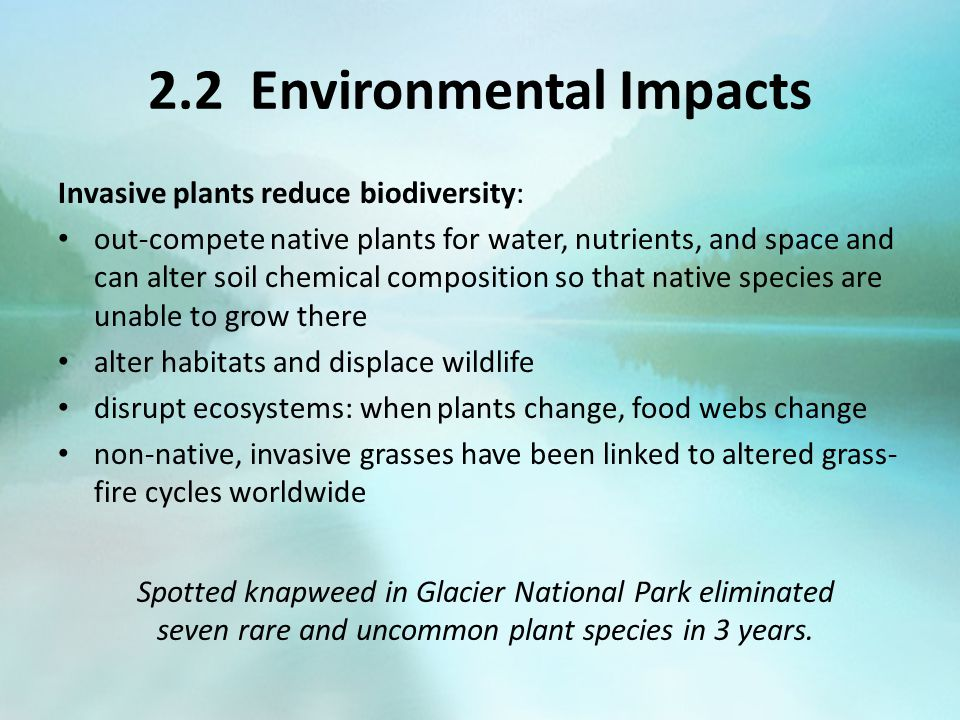 2.2 Environmental Impacts Invasive plants reduce biodiversity: out-compete native plants for water, nutrients, and space and can alter soil chemical c