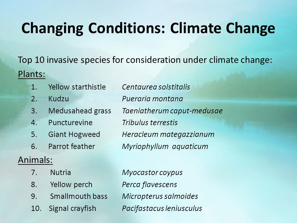 Changing Conditions: Climate Change Top 10 invasive species for consideration under climate change: Plants: 1.