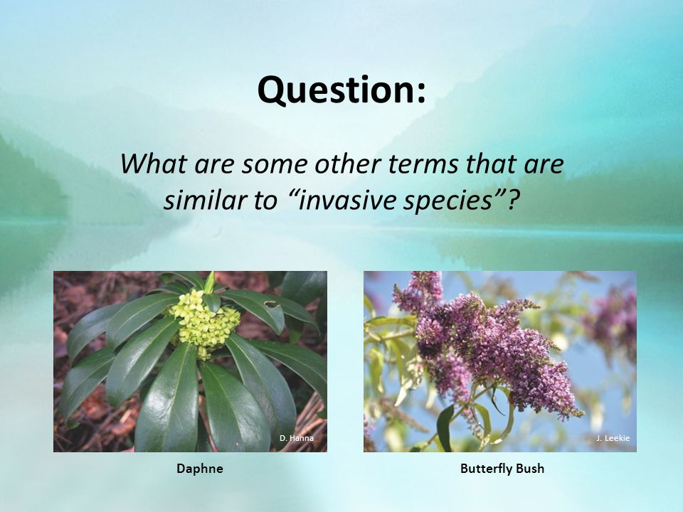 "Question: What are some other terms that are similar to ""invasive species""? Butterfly Bush J. Leekie Daphne D. Hanna"