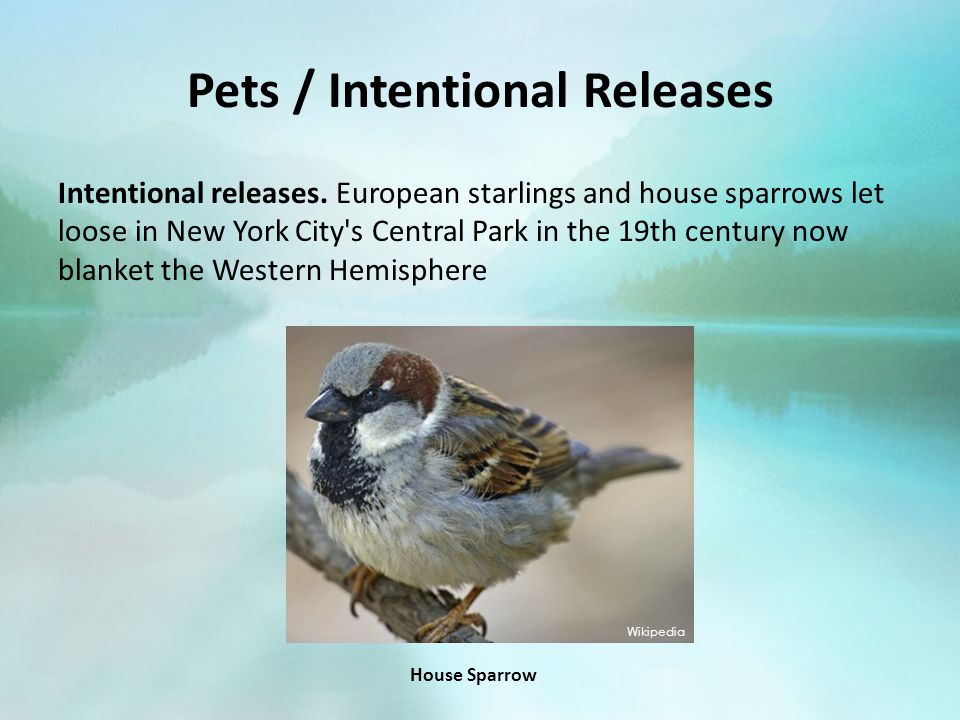 Pets / Intentional Releases Intentional releases.