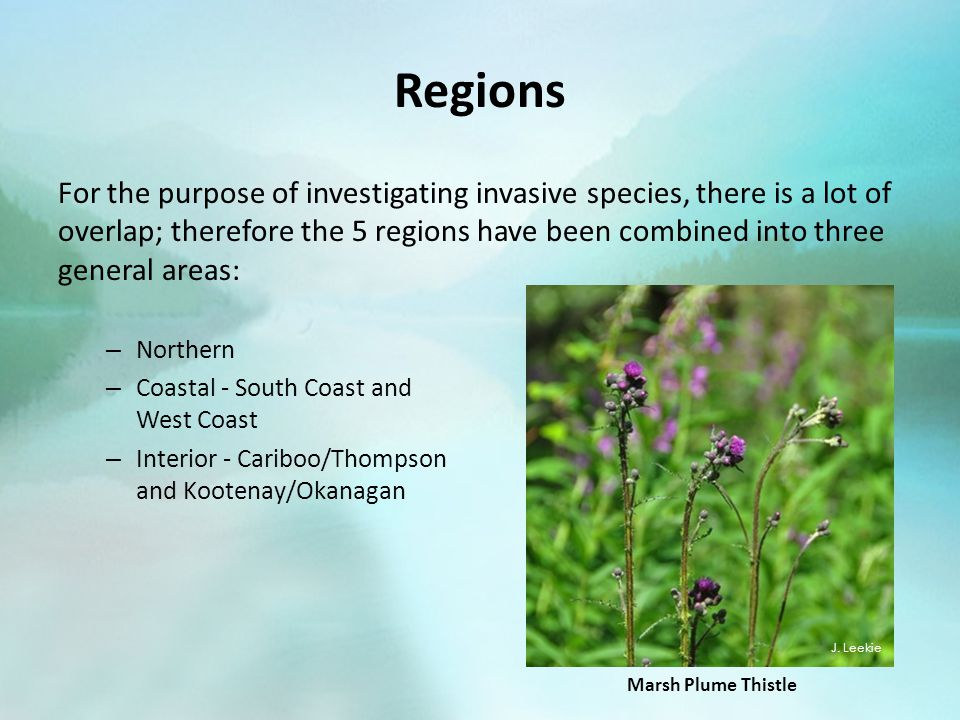 Regions For the purpose of investigating invasive species, there is a lot of overlap; therefore the 5 regions have been combined into three general areas: – Northern – Coastal - South Coast and West Coast – Interior - Cariboo/Thompson and Kootenay/Okanagan J.