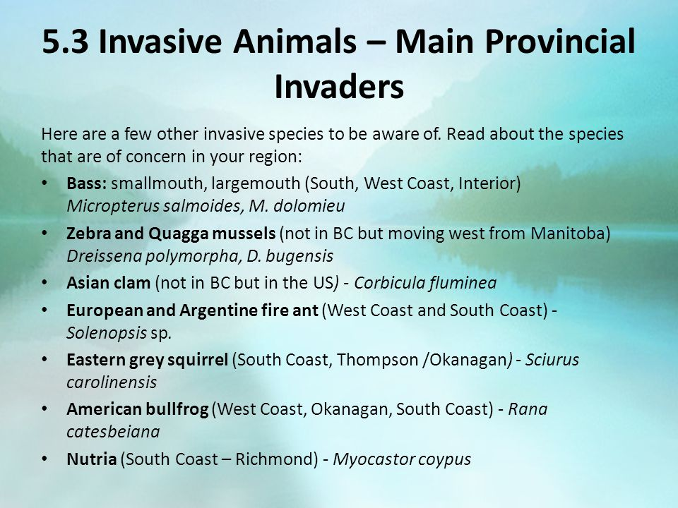 5.3 Invasive Animals – Main Provincial Invaders Here are a few other invasive species to be aware of. Read about the species that are of concern in yo