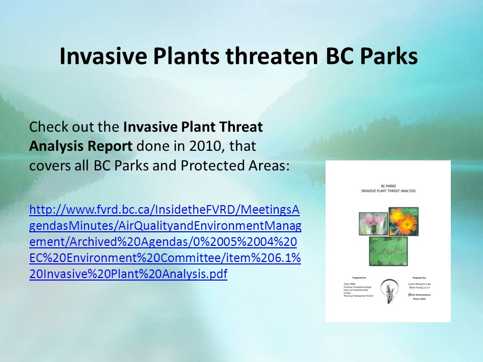 Invasive Plants threaten BC Parks Check out the Invasive Plant Threat Analysis Report done in 2010, that covers all BC Parks and Protected Areas: http