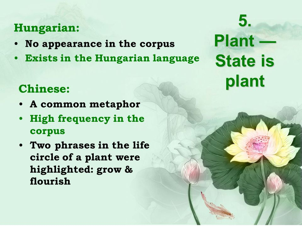 5. Plant — State is plant Hungarian: No appearance in the corpus Exists in the Hungarian language Chinese: A common metaphor High frequency in the cor