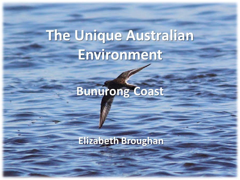 The Unique Australian Environment Bunurong Coast Elizabeth Broughan