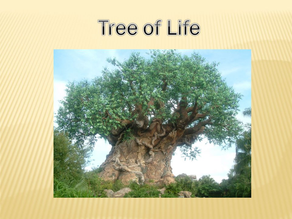 Tree of Life: A tree of life is a mighty and magical tree which is mystically infused with primal forces of life.