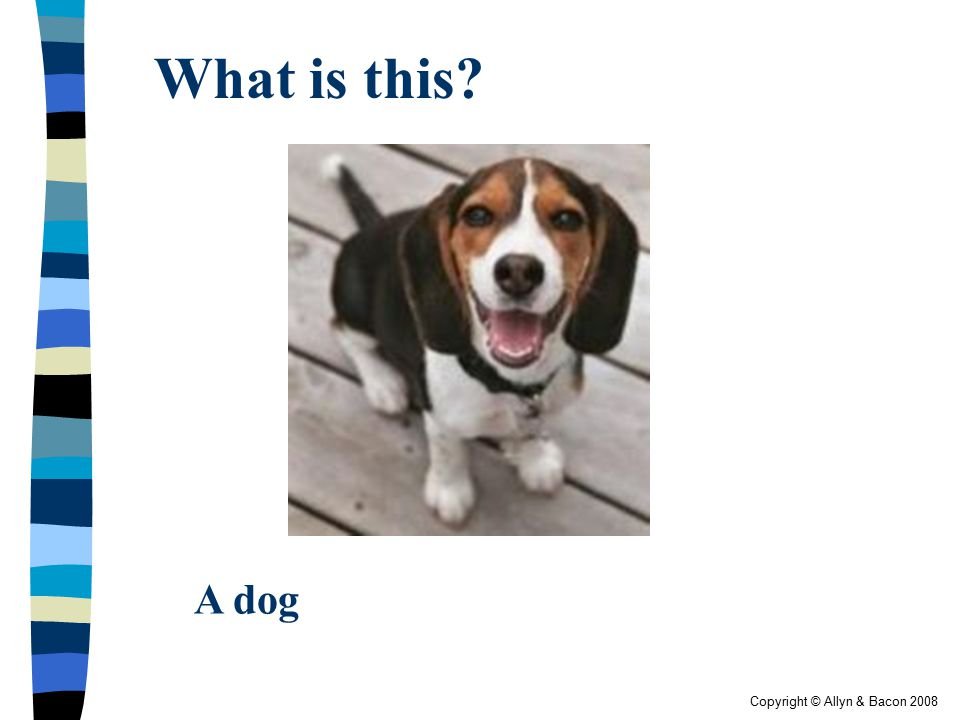 Copyright © Allyn & Bacon 2008 What is this? A dog