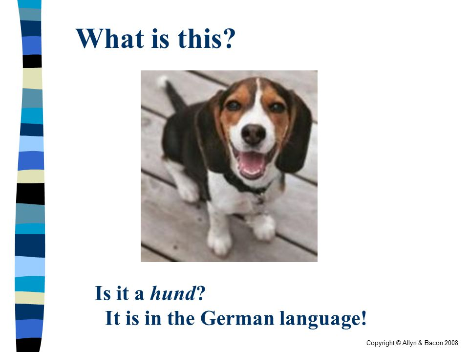 Copyright © Allyn & Bacon 2008 What is this? Is it a hund? It is in the German language!