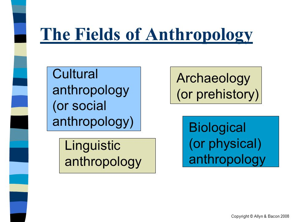 Copyright © Allyn & Bacon 2008 The Fields of Anthropology  Four fields (p.