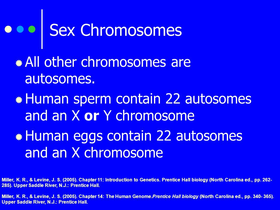 Sex Chromosomes  X and Y chromosomes  Determine the sex of the offspring  Females have two large XX chromosomes  Males have an X and a smaller Y chromosome (XY).
