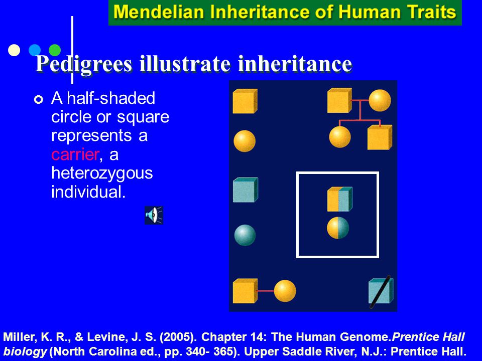 Pedigrees illustrate inheritance Circles and squares that are not highlighted represent individuals that do not show trait.